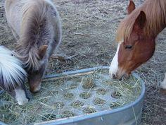 "Slow feeder/no waste hay feeder. 1/4"" plexiglass with 4"" holes. I wanna make one! Hay Feeder For Horses, Horse Feeder, Horse Stables, Horse Barns, Horse Hay, Horse Care Tips, Horse Fencing, Slow Feeder, The Barnyard"