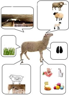 About Animal bu picture Farm Animal Crafts, Animal Crafts For Kids, Animal Projects, Farm Animals, Wild Animals, Farm Activities, Animal Activities, Science For Kids, Science And Nature