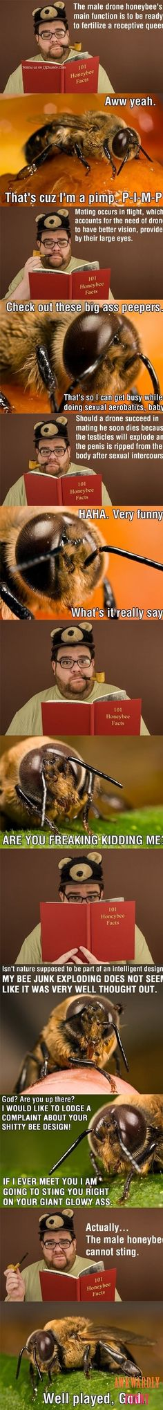 LMAO!!! A bee learns about bees�?�