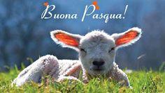 "AgireOra - Iniziativa ""Buona Pasqua"" 2014"