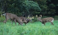 Overcome Early Bowhunting Season Mishaps and Harvest a Buck | Field & Stream