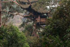 Gibbon Treehouse, #Laos Questa casa sull'albero in Laos può ospitare fino a 8 persone. Il Gibbon Experience gestisce queste case collegate tra loro dazip linep. Tutti i profitti vengono reinvestiti in progetti di conservazione all'interno della riserva di #Bokeo. Per info gibbonexperience.org.