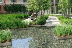 Benches near the stormwater-fed pool offer a pleasant place to sit and spend time.  Plantings within the water feature are placed in perfora...