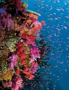 coral reefs off the coast of Fiji