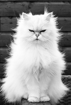 Cats, animals, photography, white and black .