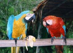 petparrots.net | Give your parrot the very best care and training