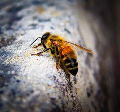 A small orange bee