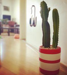O cacto de hj foi entregue para a @anabiagb e já está decorando a sala dela  #oitominhocas #maisverde #plantinhasemcasa #plantinhas #decoracao #cactos #cactus #vasogabriela