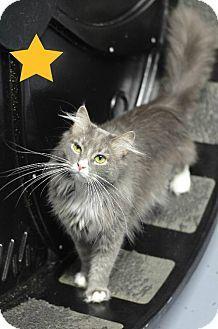Atlanta, GA - Domestic Mediumhair. Meet Zoe 13164, a cat for adoption. http://www.adoptapet.com/pet/10531581-atlanta-georgia-cat