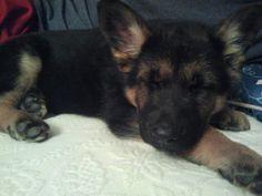 Cat nap? I preffer puppy nap :)