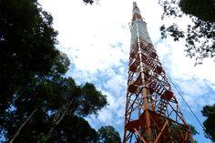 Inpa começa a instalar equipamentos na Torre Atto para monitorar o clima da floresta amazônica - Notícia - Ciência, Tecnologia, Inovações e Comunicações