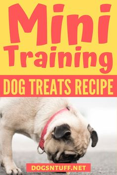 All fur parents want the best for their pooch. So, why not make your own DIY Dog Training Mini Treats? It is a quick and easy recipe, plus you can control the sizes and ingredients based on your dog's need. #DIYDogTreats #DogTreats #NoBake #DogTreatsHomeMade Diy Dog Treats, Homemade Dog Treats, Small Dog Breeds, Small Dogs, Can Dogs Eat Bananas, Mini Dogs, Dog Facts, How To Make Diy, Dog Recipes