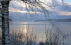 Jäätyvä järvi - talvi järvimaisema Tuusulanjärvi koivu vesi jäätyä kylmä hyyhmä…