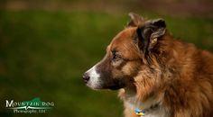Mountain dog photography