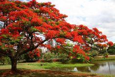 Expoflora é a maior exposição de flores e plantas ornamentais da América Latina, realizada anualmente em Holambra para dar as boas-vindas à primavera.......