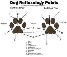 Dog reflexology #dogs
