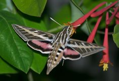 Local Bug Population Booming | KPBS