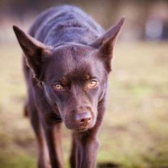 Dogs 28 #Dog #dogs #animal #animals #nature #paw #photo #photography #fliiby #images #yyazilim #people #nature