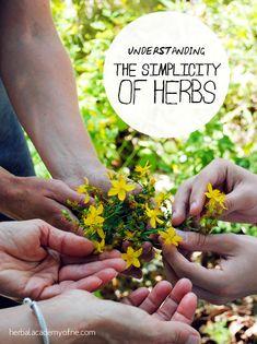 Understanding the Simplicity of Herbs - Herbal Academy of New England