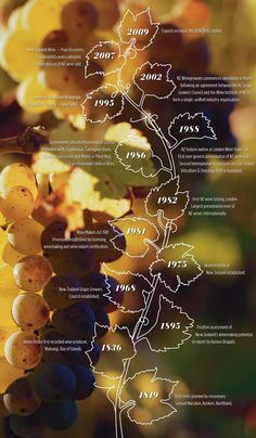 nz new zealand wine timeline-history 19th 20th century
