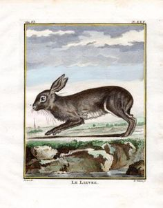 """ le Lievre "" , 1766. Copper engraving, Antique Hand Colored Print, Buffon Natural History. Measures 10 x 8 inches. 27 x 22 cm."
