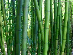 bamboo.jpg (1600×1200)