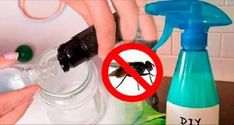Meet the most effective mosquito REPELLENT, ecological and cheap in this video.