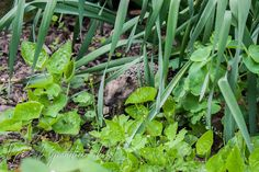 A little hedgehog in my garden: what a cutie!