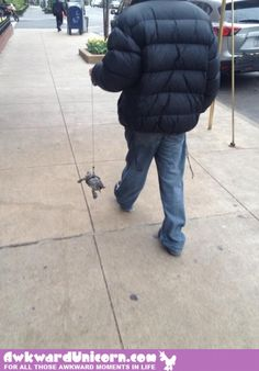 One small step for man . Awkward Animals, Funny Animals, Cute Animals, Animal Funnies, Funny Images, Funny Pictures, Boy Walking, Pet Turtle, One Small Step