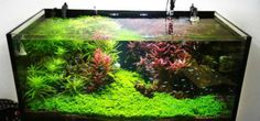 Freshwater planted aquariums have been gaining popularity recently, but can take…
