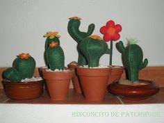 En casa siempre ha habido cactus, es una de las pasiones quecompartíanmis padres y los recuerdo de todas las formas y colores. Son unas pl...