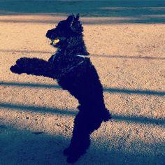 Yuhuuuu!! Ja es dijous!! I fa un solet que ens encanta!!! Os esperem a #imperfectsalon #sitges per posar-vos guapos!!! #crash #dog #moltbondia #losperrosbuenossonbienvenidos #beautysalon