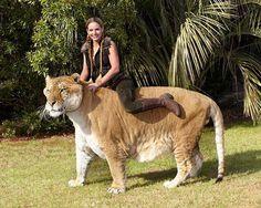 enorma-djur-8