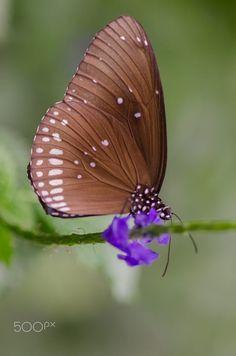butterfly by Nicole Wiggerman