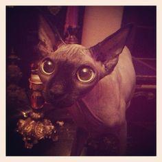 Hope you all have a good day ❤️ @Kat Von D #katvond #piaf #kvdpiaf #kvdcats