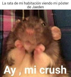 Funny Spanish Memes, Spanish Humor, Stupid Memes, Funny Memes, Jokes, Videos Funny, Reptiles, Funny Animals With Captions, Just Kidding