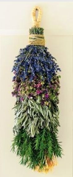 Hang this swag in the kitchen then snip off sprigs of preserved lavender Santa Cruz oregano sage rosemary to add to favorite recipes. The herbicide-free and pesticide-free herbs are grown and arranged by hand on a family farm in Monterey California. Smudge Sticks, Healing Herbs, Growing Herbs, Herbal Medicine, Herbal Remedies, Natural Remedies, Health Remedies, Dried Flowers, Herbalism