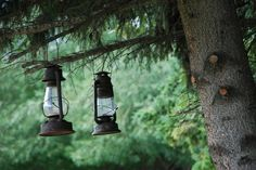 Tree lamps.