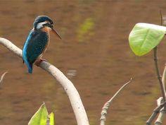 Dr. Salim Ali Bird Sanctuary in Goa, India