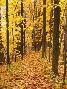 autumn in Michigan....I do miss it!
