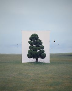 Tree #2, from the series Photography-Act, 2007 by Myoung Ho Lee