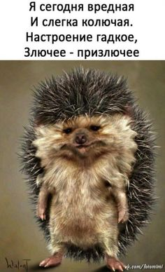Cute Animals Images, Cute Animal Pictures, Funny Animals, Funny Pictures, Russian Humor, Russian Quotes, Clever Quotes, Funny Quotes, Hr Humor