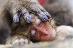 """Heartwarming and heartbreaking animal images. """"A mother's hand"""" by Alain Mafart Renodier, France"""