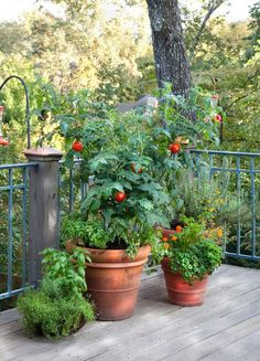 List of what size pots to grow veggies in