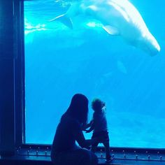 How military families can get free tickets to Sea World San Diego through Waves of Honor