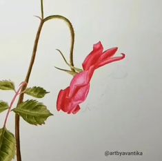 Watercolor Flowers Tutorial, Watercolor Video, Watercolor Projects, Watercolour Tutorials, Watercolor Rose, Flower Tutorial, Poppy Flower Painting, Flower Art, Rose Drawing Simple