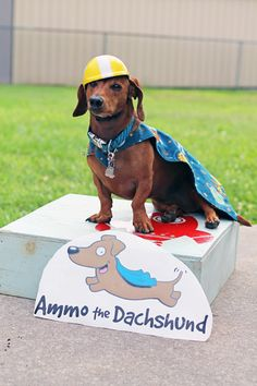 Nipomo Imprints Review & Giveaway // Ammo the Dachshund - Super Hero