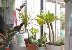 a few garden greens in my 'green house' corner