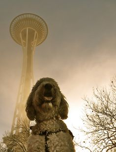 Casey & the Space Needle on a foggy Thanksgiving morning. (antique)