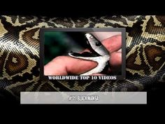 Top 10 Most Venomous Snakes - YouTube